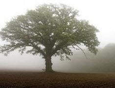 Mustardtree